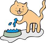 Une nouvelle en 2 semaines: La technique du «Jeté de chat dans l'eau»