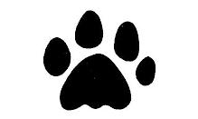 Rêve : La patte du chat